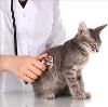 Ветеринарные клиники в Змиевке